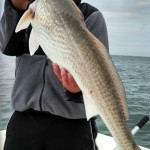 CaptTrevRedDrum - Wilmington Fishing Charters
