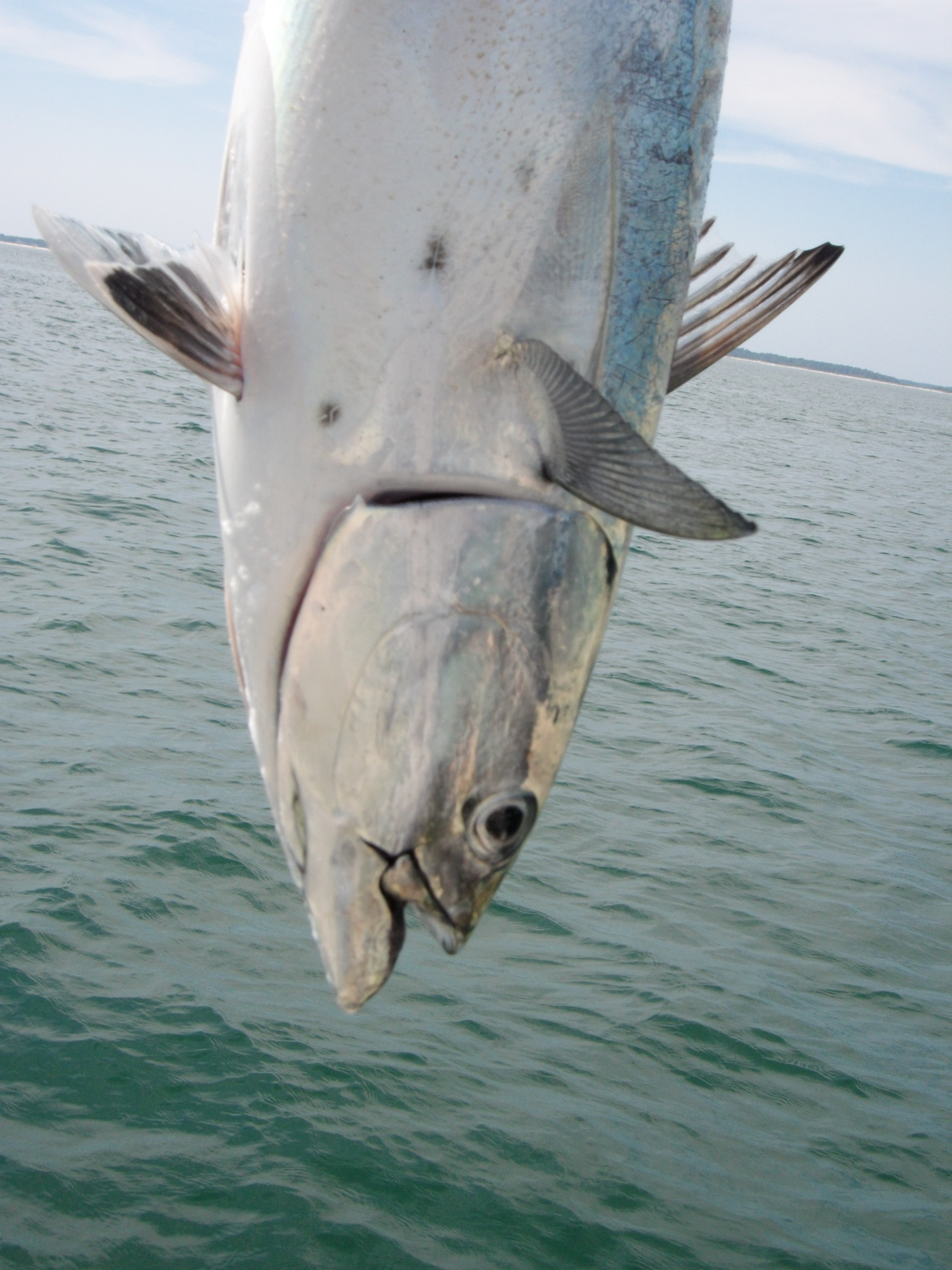 Afternoon Fishing Charters