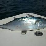 Tuna Charters with ProFishNC Charters