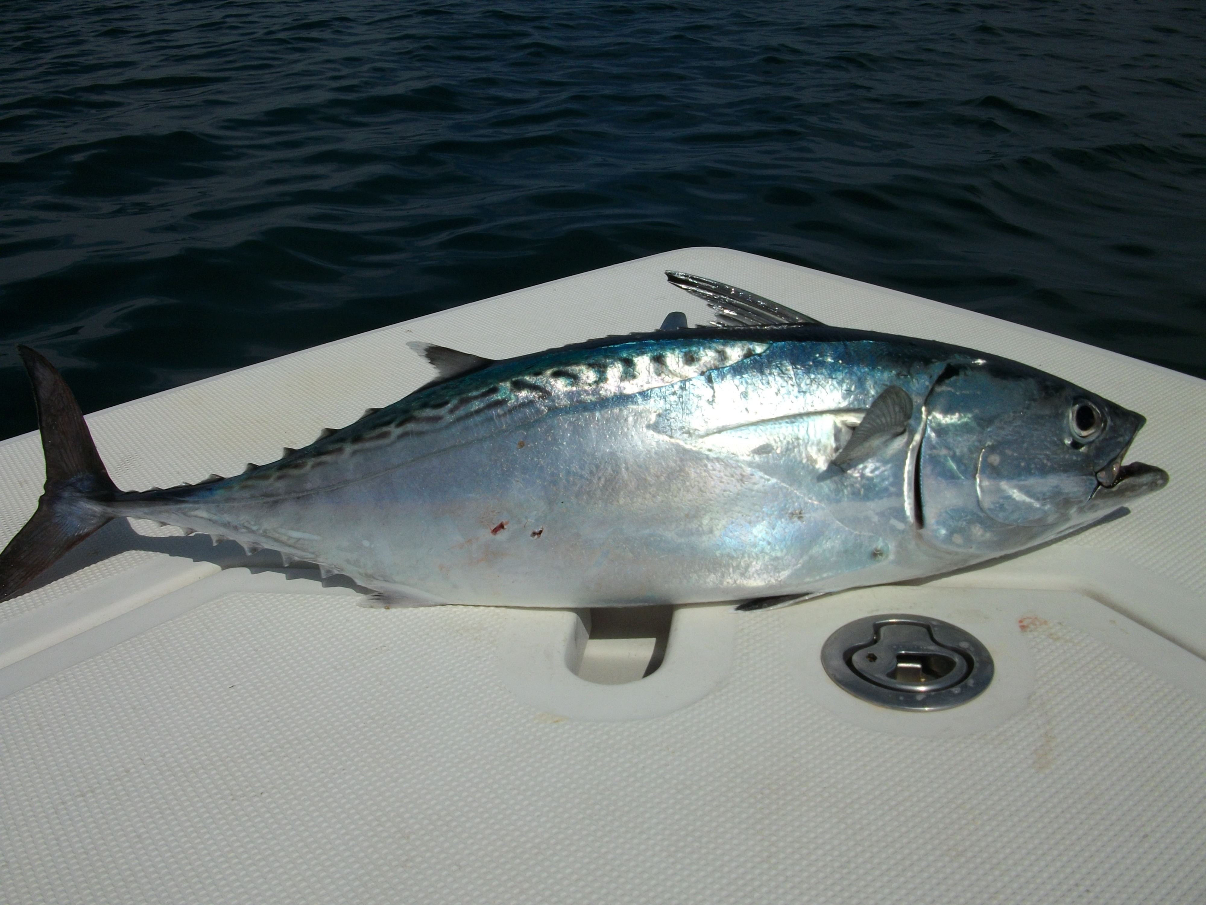 Offshore Fishing Charters in NC