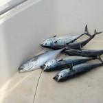 More Tuna Fishing Charters