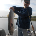 Backwater Spring Bluefish
