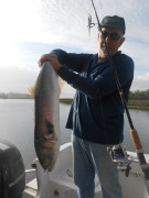 Monster Backwater Bluefish!