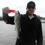 Small Inshore Bluefish Fishing North Carolina