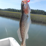 Topsail Beach Fishing Charters Speckled Trout Fishing