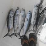 Topsail Beach Bonito Fishing Charters