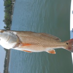 Figure Eight Island Red Drum ProFishNC Charters