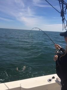 Offshore Bottom Fishing Carolina Beach