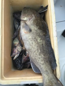 Bottom-fishing Charters Topsail Beach